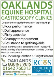 Oaklands Equine Hospital gastroscopy clinics